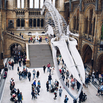 A large dinosaur skeleton in a museum