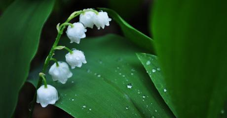 Lily of the valley emblem of the PSBRU