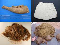 four images of items to be analysed such as bone and hair