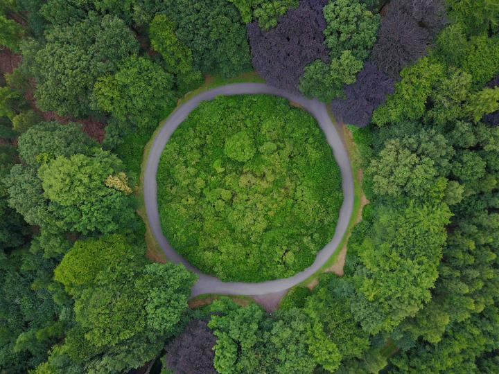 Green forest shown from above with roundabout to depict the abstract of circular economy